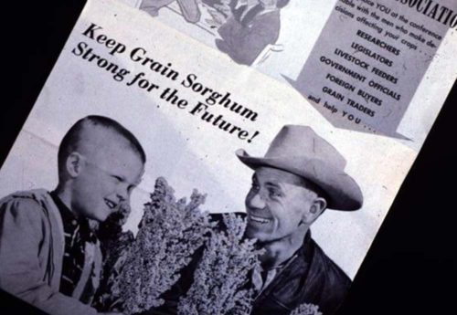 National Sorghum Producers History The Beginning