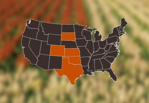 National Sorghum Producers Sorghum 101 Sorghum Production In The Us