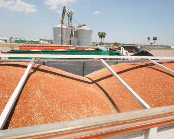 National Sorghum Producers E Memberships Help Us