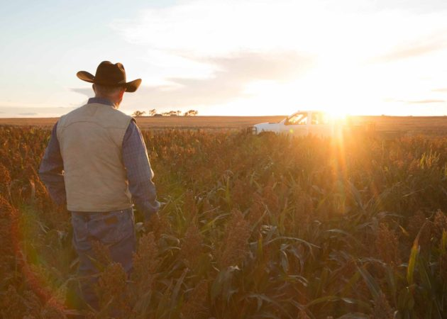 National Sorghum Producers Advancing The Industry