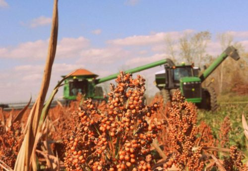 National Sorghum Producers Join NSP