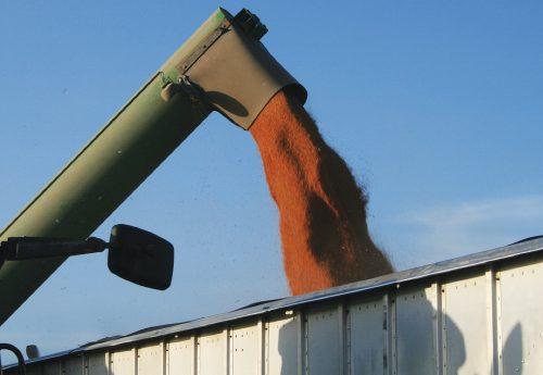Grain Dump FeaturedImage